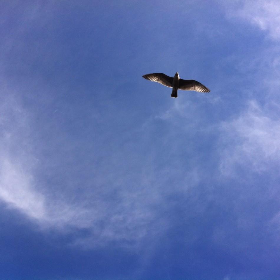 Flying free, unlike me