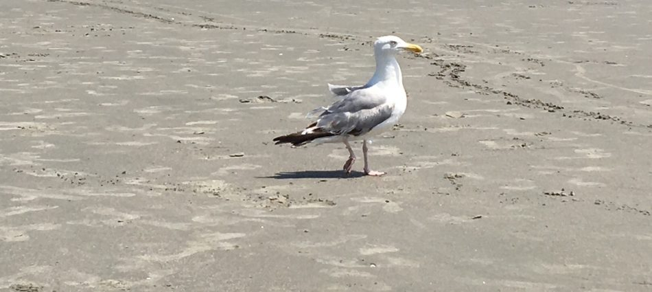 That's Mr. Gull