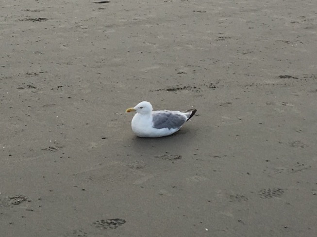 I believe he's ready for the humans to leave the beach immediately so he can reclaim his peace.